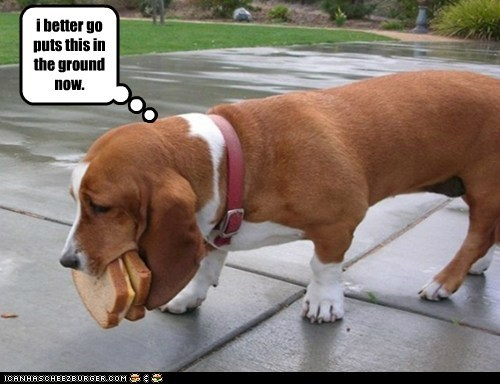 Cheezburger Image 6555376896
