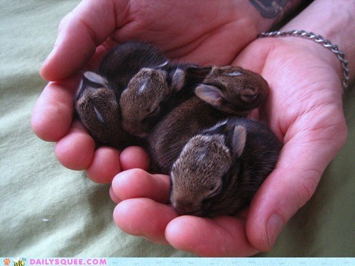 baby bunny handful happy bunday rabbit squee tiny - 6555379456