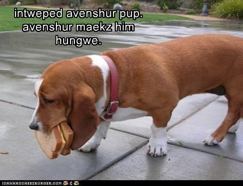 intweped avenshur pup. avenshur maekz him hungwe.