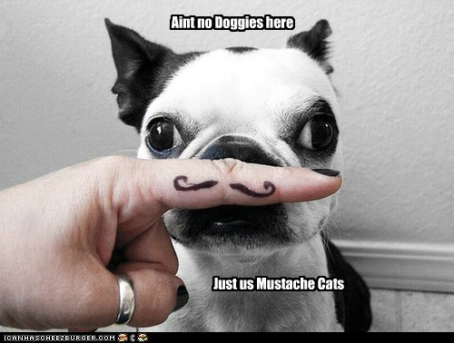 Aint no Doggies here Just us Mustache Cats