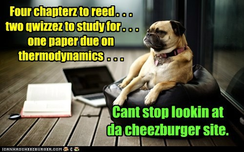Four chapterz to reed . . . two qwizzez to study for . . . one paper due on thermodynamics . . . Cant stop lookin at da cheezburger site.
