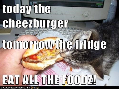 Cheezburger Image 6555765760