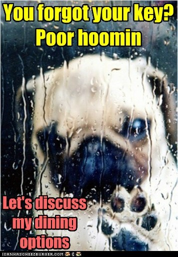 pug rain locked out food bargain dogs captions categoryimage - 6556488960