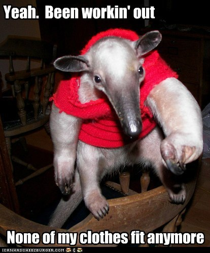 aardvark,big,clothes,dont-fit,muscles,strong,working out
