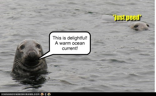 current,delightful,guilty,ocean,peed,seals,warm