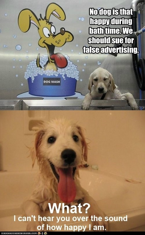 dogs dog washing machine false advertising bath time puppy happy - 6556549888
