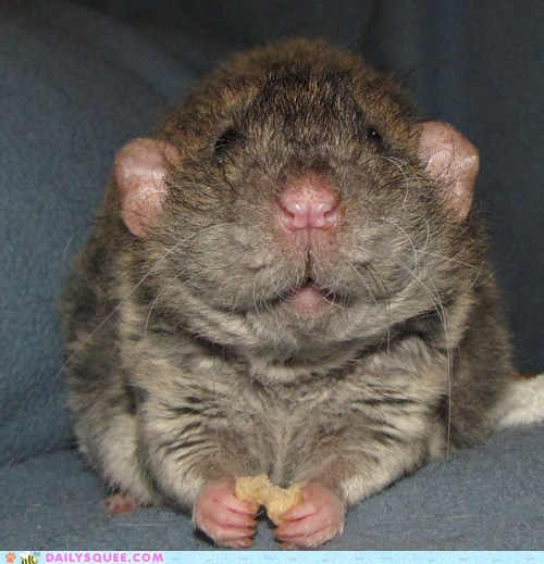 noms,pet,rat,reader squee,smile,treat