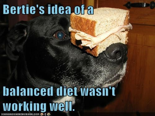 dogs,what breed,sandwhich,diet,balanced diet,ham