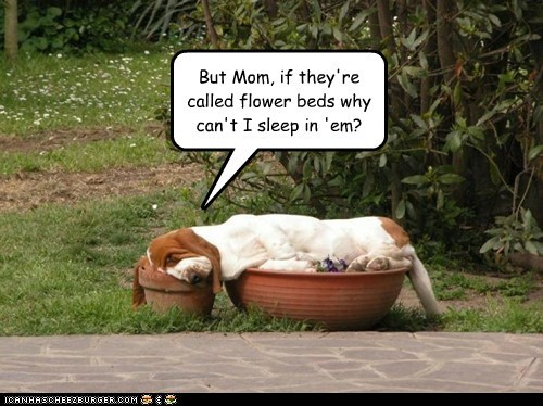 dogs basset hound flower bed sleeping nap garden back yard - 6557054464