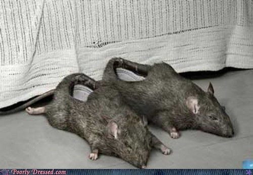 rats slippers - 6557142784