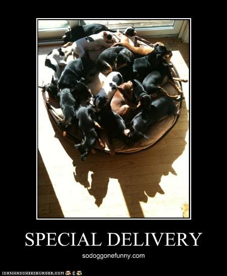 SPECIAL DELIVERY sodoggonefunny.com