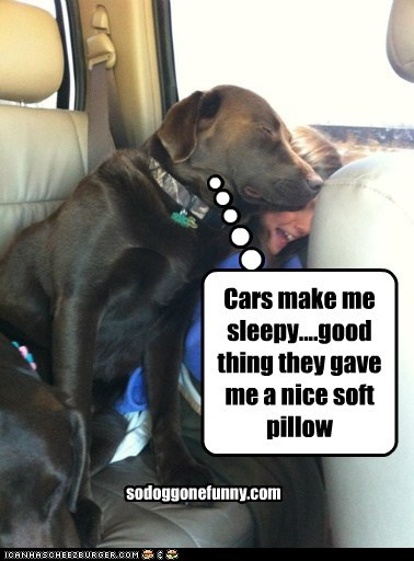 Cars make me sleepy....good thing they gave me a nice soft pillow sodoggonefunny.com