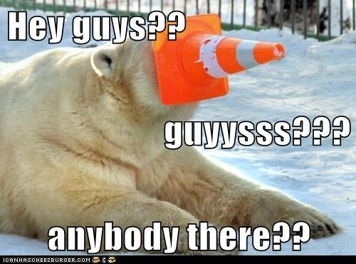 anybody calling guys lonely polar bear stuck traffic cone