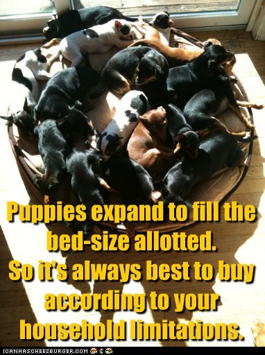 Puppies expand to fill the bed-size allotted. So it's always best to buy according to your household limitations.