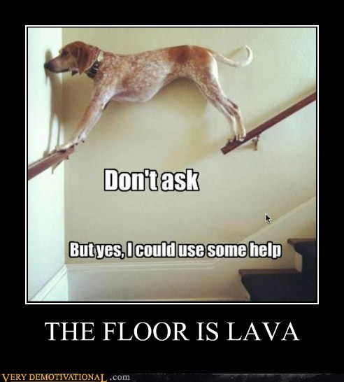 dogs floor lava wtf - 6557725184