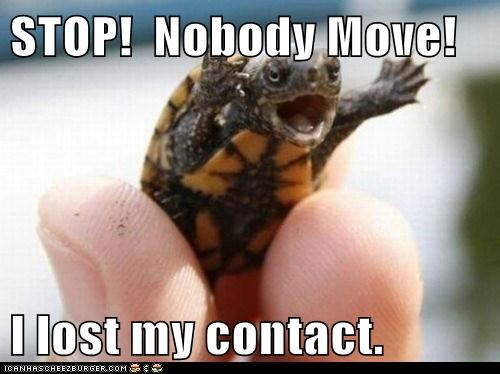 contact,dont-move,help,lost,small,stop,turtle
