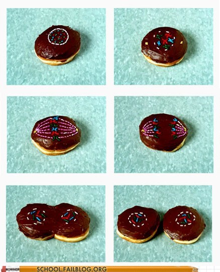 donuts,mitosis,nerdy noms