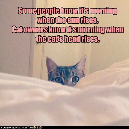 bed,birds,captions,Cats,head,morning,peek
