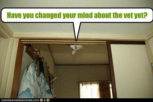 captions Cats ceiling change hide hostage mind peek vet