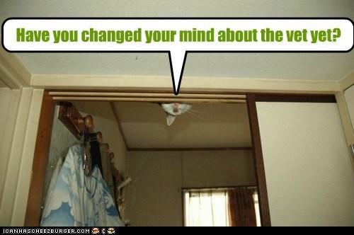 captions Cats ceiling change hide hostage mind peek vet - 6558352896