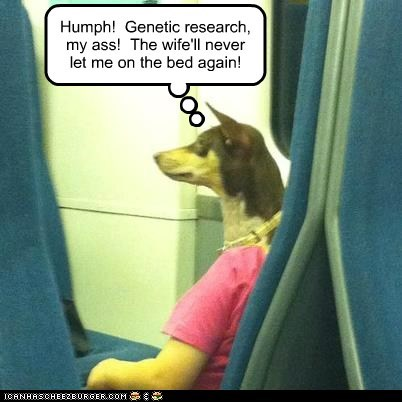 Humph! Genetic research, my ass! The wife'll never let me on the bed again!