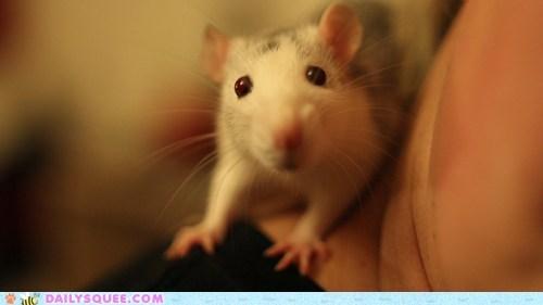 camera model pet rat reader squee - 6558514432