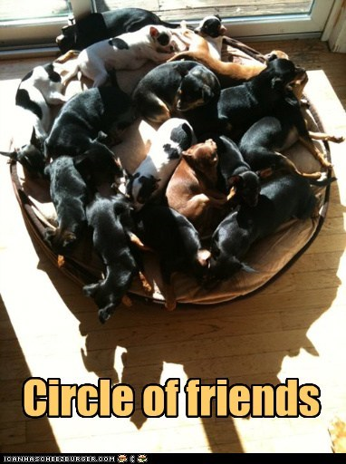 circle cuddle puddle dog bed dogs - 6558844672