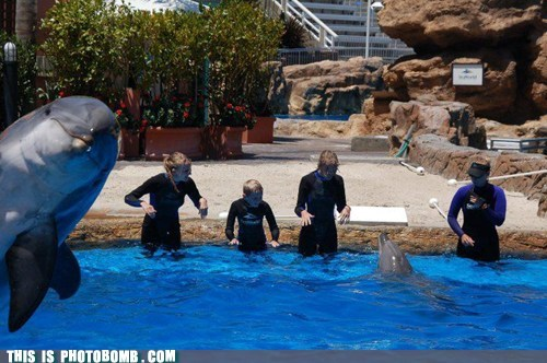 animals awesome cute dolphins - 6558887168