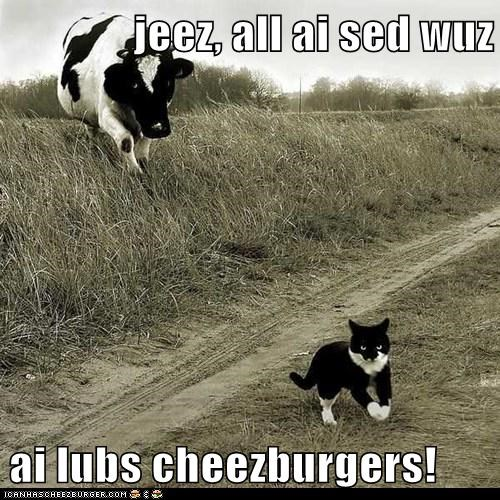 Cheezburger Image 6558959104