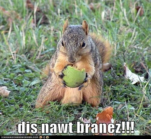 brains,disappointed,eating,squirrel,zombie