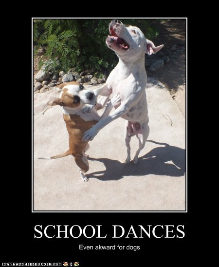 SCHOOL DANCES Even akward for dogs