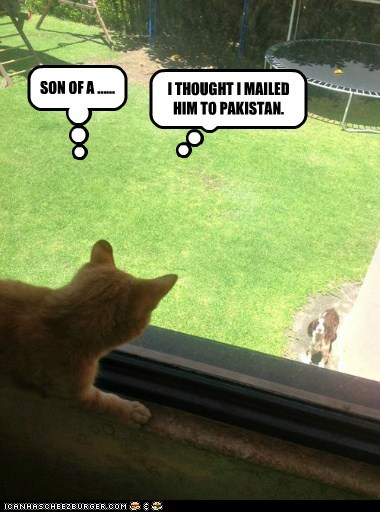 captions Cats dogs mail package Pakistan post what breed - 6559114496