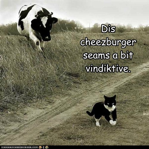 cat,chasing,cheezburger,cow,eating,revenge,running,vindictive