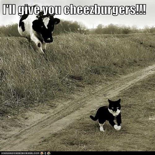 Cheezburger Image 6559244288