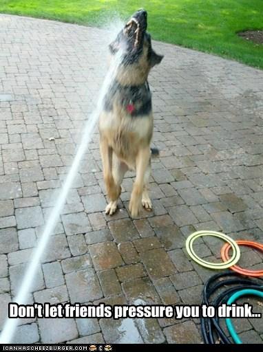 german shepherd hose psa categoryimage - 6559250944