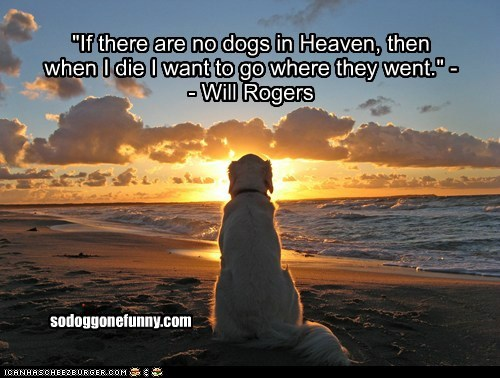 """""""If there are no dogs in Heaven, then when I die I want to go where they went."""" -- Will Rogers sodoggonefunny.com"""