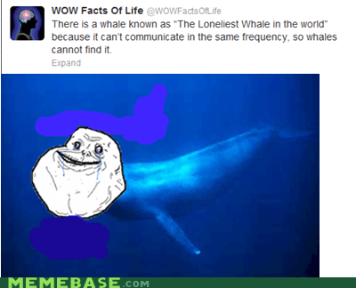 forever alone Sad whale - 6559345664