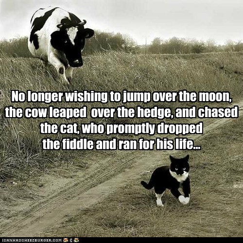 cat,chasing,cow,fiddle,leaping,nursery rhyme,ran