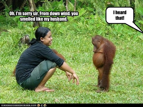orangutan,i heard that,smell,husband,sorry,ashamed,laughing