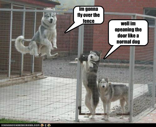 captions dogs door flying hover dog huskie husky levitate pen