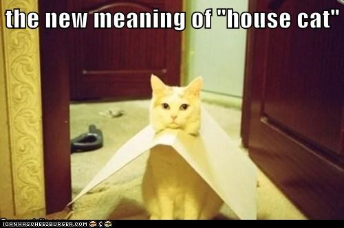 "the new meaning of ""house cat"""