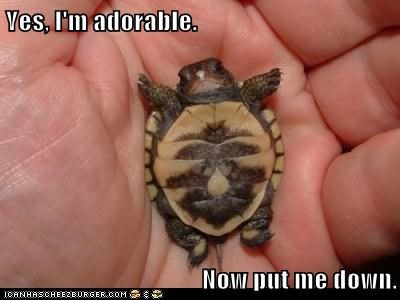 adorable cute holding put me down small squee turtle