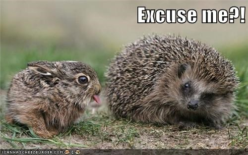 Animal meme of a hedgehog asking 'excuse me' to a bunny that is sticking out his tongue in what looks like disgust.