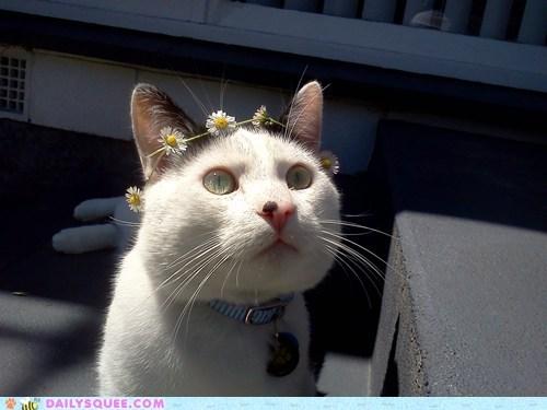 cat daisy flowers pet reader squee spots - 6560338944