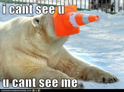 cant-see,hiding,logic,polar bear,traffic cone