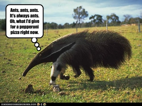 anteater,ants,bored,change,food,hungry,pepperoni,pizza,tired