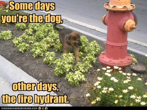 Some days you're the dog, other days, the fire hydrant.