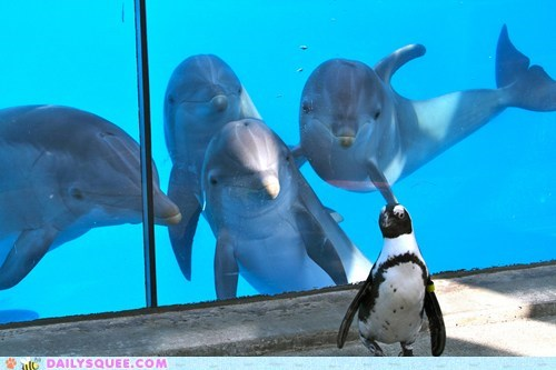 dolphin dat aquarium Interspecies Intermingling penguin squee