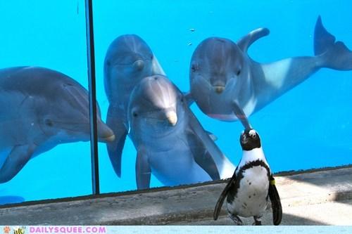 dolphin aquarium penguin squee - 6560935680