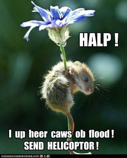 climbing,flood,Flower,hanging on,helicopter,help,mouse,send help